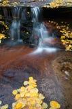 Zen Waterfall. A zen like waterfall accentuates fall foliage leaf litter stock photos