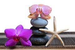 Zenkiesel und Orchideenblumen Lizenzfreies Stockfoto