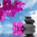 Zenmassagestenar och orkidéblommor reflekterade i vatten Arkivbild