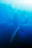 Zenobia Ship Wreck near Paphos, Cyprus Stock Photography