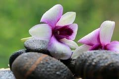 Zenstein und -orchideen Lizenzfreie Stockfotografie