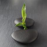 Zensteine und -bambus Lizenzfreies Stockfoto