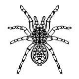 Zentangle传统化了蜘蛛 纹身花刺或T恤杉的剪影 库存图片