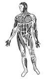 Zentangle肌肉人,徒手画的铅笔,传染媒介,例证,轻拍 免版税库存图片