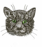 zentangle γάτα Στοκ Εικόνα