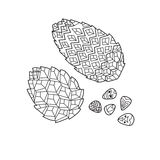 Zentangle the Baikal pinecones Stock Images