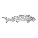Zentangle the Baikal Sturgeon for adult anti stress Coloring Stock Images