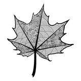 Zentangle black and white leaf of the tree maple. Royalty Free Stock Photos