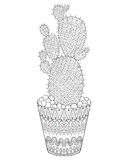 Zentangle Cactus vector illustration. Hand drawn outline desert Stock Photography