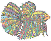 Zentangle doodle betta fish - colorful version of coloring page. Royalty Free Stock Photo