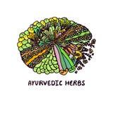 Zentangle element. Ayurvedic herbs Royalty Free Stock Photos
