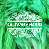 Zentangle element on blurred background. Culinary Stock Photography