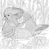Zentangle estilizou o pato de mandarino