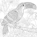 Zentangle estilizou o tucano Foto de Stock