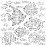Zentangle fish collection. Collection of tropical fishes. Coloring Page. Colouring picture. Adult Coloring Book idea. Freehand sketch drawing. Vector Royalty Free Stock Photography