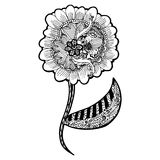 Zentangle flowers doodle designs on white background Royalty Free Stock Photography