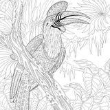 Zentangle gestileerde rinoceros hornbill vogel (Buceros-rinoceros) vector illustratie