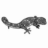 Zentangle ha stilizzato l'illustrazione della lucertola Illustrazione disegnata a mano di scarabocchio isolata su fondo bianco Fotografie Stock Libere da Diritti