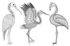 Zentangle Hand drawn Stork, Flamingo, Brolga for adult antistres Stock Images