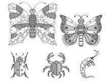 Zentangle insects illustration. Stock Images