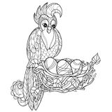Zentangle  parrot on nest. Hand Drawn vector Royalty Free Stock Photo