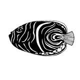 Zentangle pattern fish. Fish angel with doodle pattern for coloring book and adults. Made by trace from personal hand drawn sketch. Black and white Stock Photography