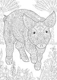 Zentangle pig piggy hog. Coloring Page. Coloring Book. Colouring picture with Pig. Cute Piggy - 2019 Chinese New Year symbol. Antistress freehand sketch drawing stock illustration