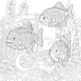Zentangle piranhas fishes Royalty Free Stock Image