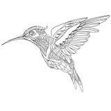 Zentangle stiliserade kolibrin Royaltyfri Foto