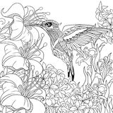 Zentangle stiliserade kolibrin stock illustrationer