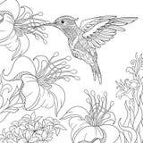 Zentangle stiliserade kolibrin royaltyfri illustrationer