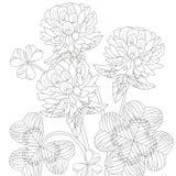 Zentangle stiliserade växt av släktet Trifolium Den drog handen snör åt vektorillustrationen Royaltyfri Bild