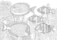 Zentangle stylized aquarium. Stylized composition of tropical fish, underwater seaweed and corals. Freehand sketch for adult anti stress coloring book page with Royalty Free Stock Image
