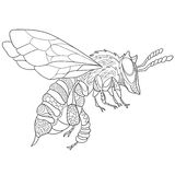 Zentangle stylized bee insect Stock Photography