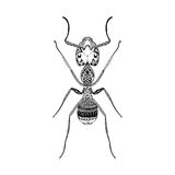 Zentangle stylized Black Ant. Hand Drawn Termite Royalty Free Stock Images
