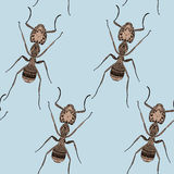 Zentangle stylized Brown Ant seamless pattern. Royalty Free Stock Image