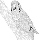 Zentangle stylized budgie parrot Stock Photography