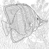 Zentangle stylized butterfly fish Royalty Free Stock Photos