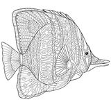 Zentangle stylized butterfly fish. Zentangle stylized cartoon butterfly fish,  on white background. Hand drawn sketch for adult antistress coloring page, T-shirt Stock Image