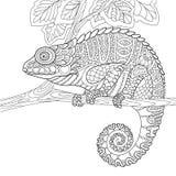 Zentangle stylized chameleon Royalty Free Stock Photography