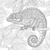 Zentangle stylized chameleon Stock Photography
