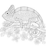 Zentangle stylized chameleon lizard. Coloring book page of chameleon lizard and stylized tropical flowers. Freehand sketch drawing for adult antistress colouring royalty free illustration