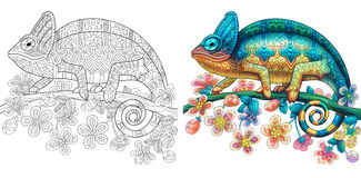 Zentangle stylized chameleon lizard. Coloring page of chameleon lizard. Colorless and color samples for book cover. Freehand sketch drawing for adult antistress royalty free illustration
