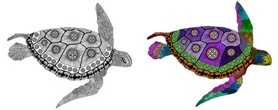 Zentangle stylized color and black turtle. vector illustration
