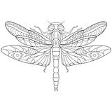 Zentangle Stylized Dragonfly Insect Royalty Free Stock Photos