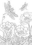 Zentangle stylized dragonfly insect Royalty Free Stock Images