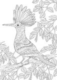 Zentangle stylized hoopoe bird. Coloring page of hoopoe bird Upupa epops sitting on birch tree branch. Freehand sketch drawing for adult antistress coloring book Stock Images