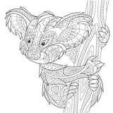Zentangle stylized koala bear. Zentangle stylized cartoon koala bear,  on white background. Hand drawn sketch for adult antistress coloring page, T-shirt emblem Stock Image