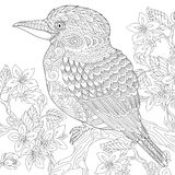 Zentangle stylized kookaburra bird Stock Images