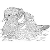 Zentangle stylized mandarin duck Royalty Free Stock Image